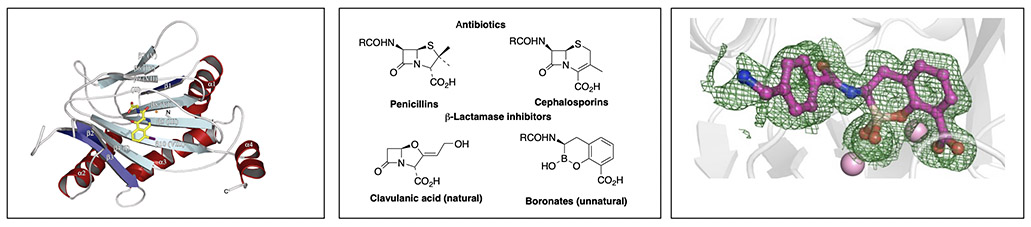 Figures illustrating Chris Schofield's research