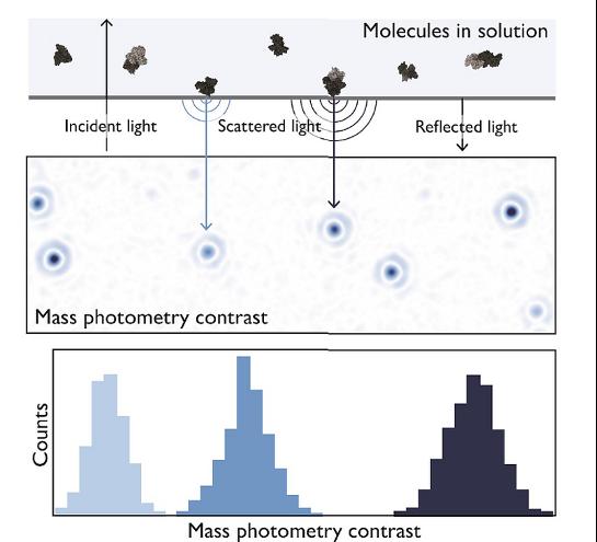 The principle behind mass photometry