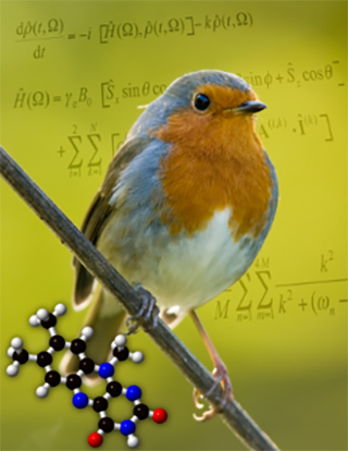Photograph of a robin which helps to illustrate Peter Hore's research