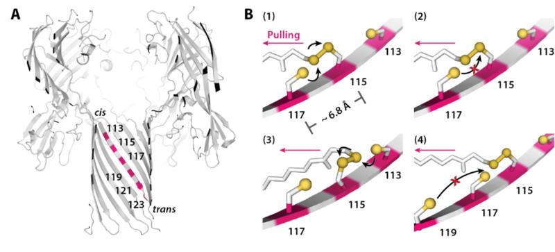 molecules that hop fig2