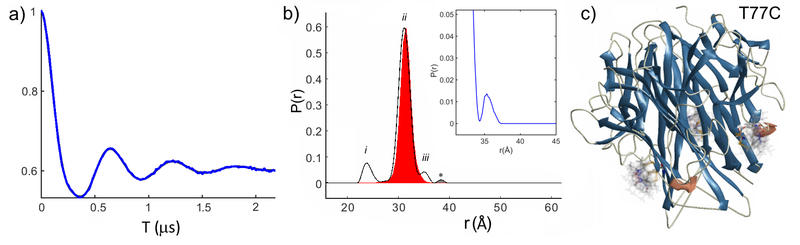 William Myers figure 2: Double Electron-Electron Resonance (DEER) of a trimeric protein alpha-Tumor Necrosis Factor