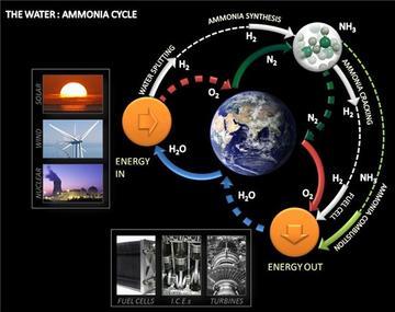 ammonia cycle